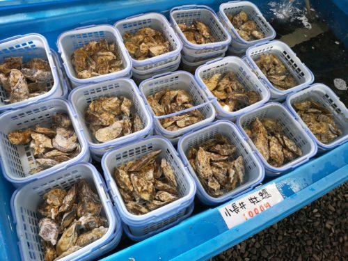 牡蠣1カゴ1000円